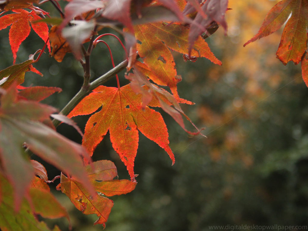 autumnal-leaves-001